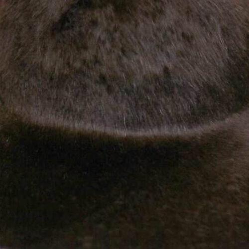 Dark brown color. Brims are size 16/17 inch brim width (113 grams).